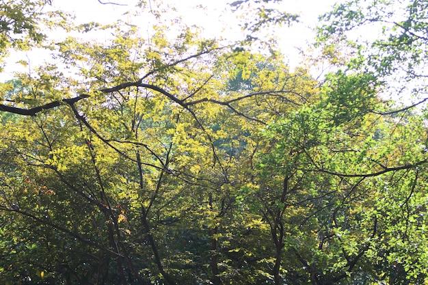 Fondo di struttura delle foglie nel giardino di estate