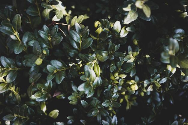 Fondo di struttura delle foglie verdi, sfondo naturale e carta da parati