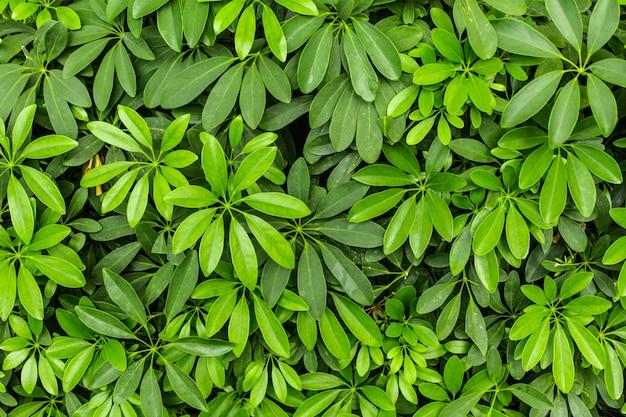 Fondo di vista superiore delle foglie verdi