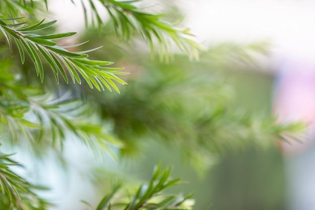 Fondo e progettazione del modello della foglia verde.