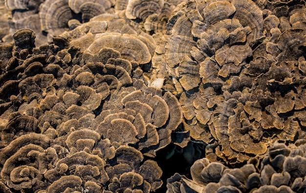 Fondo e struttura astratti della superficie del fungo.