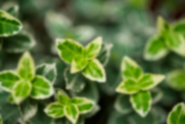 Fondo floreale defocused con foglie verdi