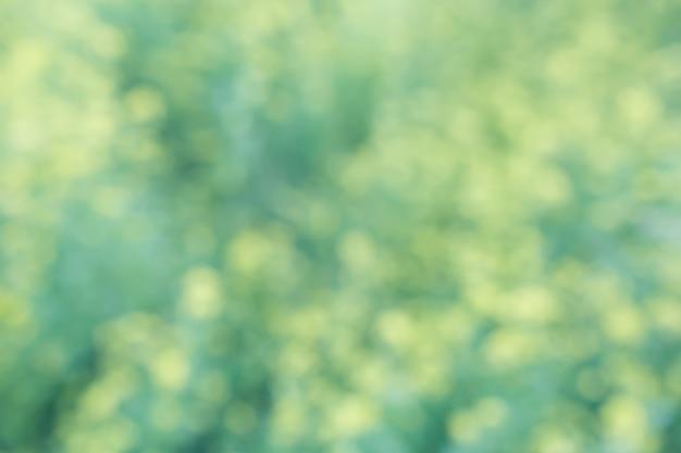 Fondo floreale verde giallo del bokeh, sfuocatura dell'obiettivo