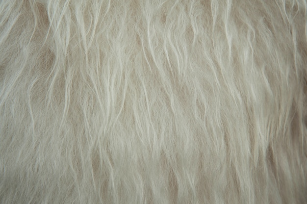 Fondo molle bianco del fondo di struttura della lana delle pecore. soffice pelliccia.