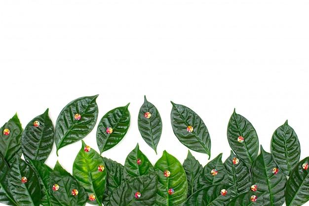 Fondo naturale di festa con le foglie verdi su un fondo bianco