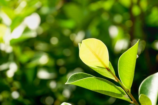 Fondo o carta da parati naturale delle piante verdi. vista della natura di foglia verde in giardino in estate sotto la luce del sole
