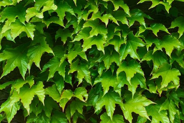 Fondo organico tropicale di struttura delle foglie verdi
