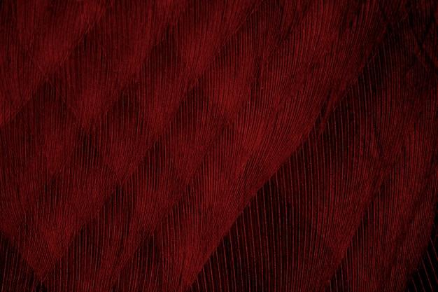 Fondo rosso di struttura del modello della piuma