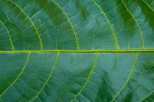 Fondo senza cuciture del modello delle foglie verdi. sfondo naturale.
