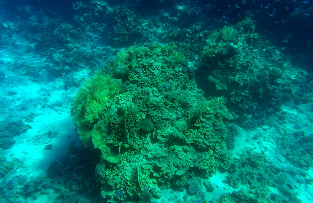 Fondo subacqueo blu profondo acquatico del fondale marino