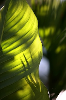 Fondo tropicale di struttura degli alberi forestali delle foglie