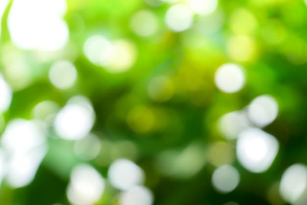 Fondo verde astratto soleggiato della natura, parco della sfuocatura con la luce, la natura, il giardino, la primavera e la stagione estiva del bokeh