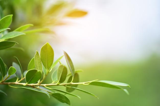Fondo verde di spec della copia di luce solare del fondo della natura della foglia