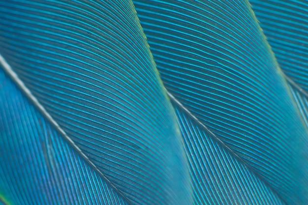 Fondo verde di struttura della piuma blu e del turchese