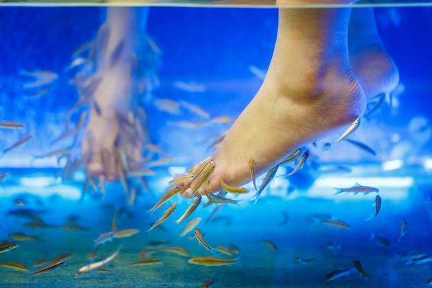 Foots in fish pedicure spa trattamento rufa garra