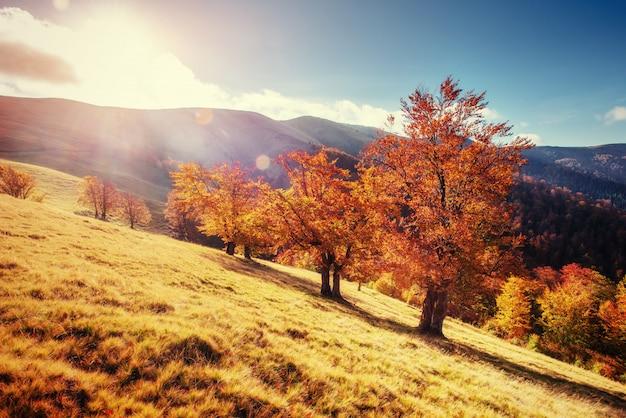 Forest road in autunno. paesaggio