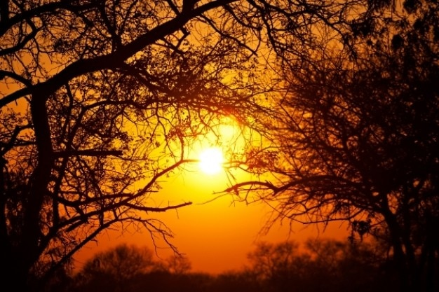 Foresta alba