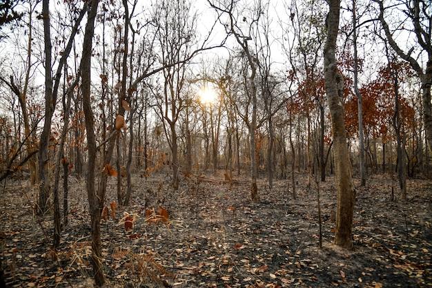 Foresta bruciata nella campagna di thailnad