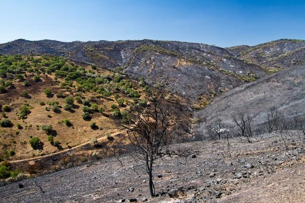 Foresta bruciata