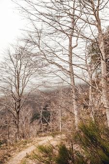 Foresta con alberi caduti e foglie in autunno