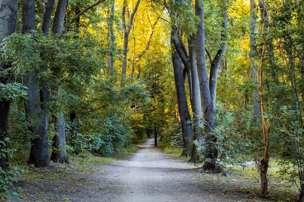 Foresta con percorso che corre vicino a filari di alberi
