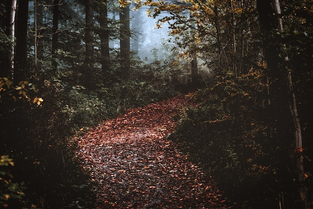 Foresta d'autunno con foglie secche