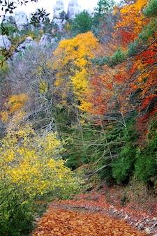 Foresta del faggio delle foglie di giallo dorato variopinto di caduta di autunno