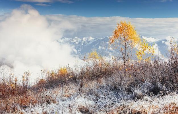 Foresta della betulla nel pomeriggio soleggiato mentre stagione di autunno.