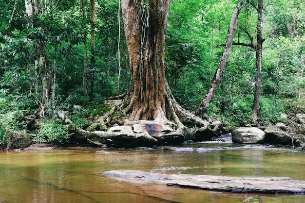 Foresta della corrente del fiume della tailandia