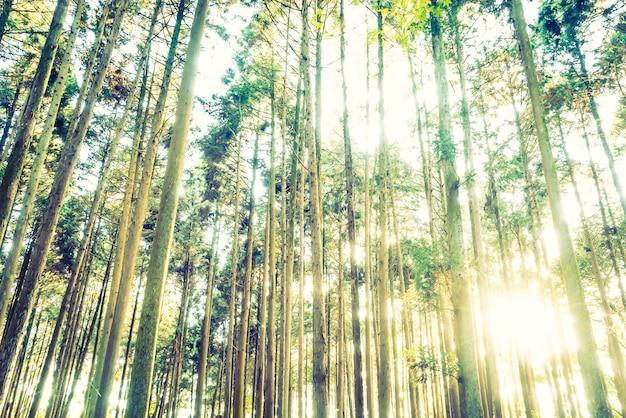 Foresta della giungla