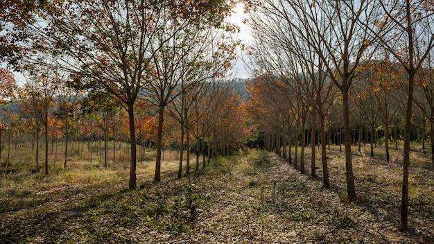 Foresta della thailandia