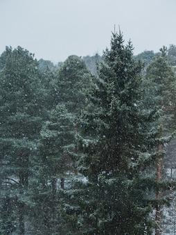 Foresta di abeti rossi durante il fiocco di neve in una giornata nebbiosa