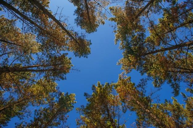 Foresta di alberi. strada forestale. sfondo verde della natura