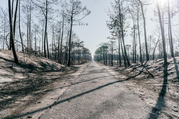 Foresta di apocalisse bruciata con ceneri pallide sul terreno