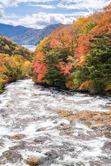 Foresta di autunno caduta nikko giappone