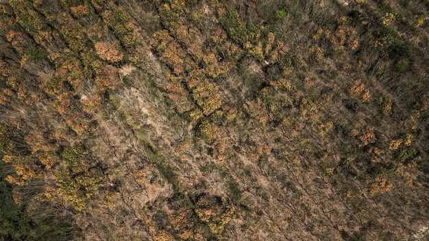 Foresta di autunno in vista aerea