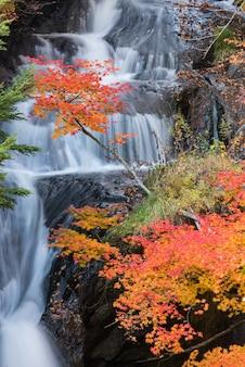 Foresta di autunno nikko giappone della cascata di ryuzu