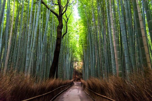 Foresta di bambù a arashiyama