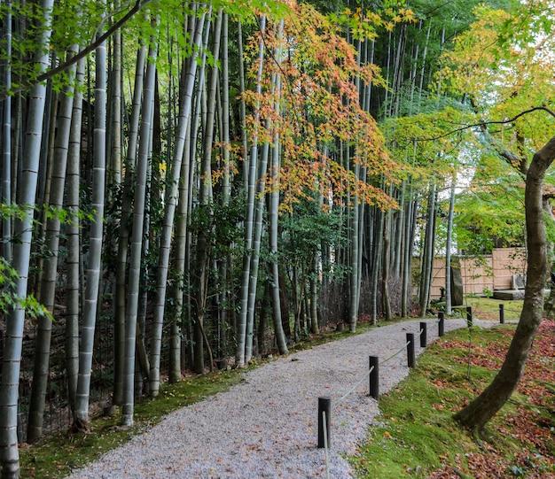 Foresta di bambù con il fogliame di caduta al tempio di enkoji a kyoto, giappone