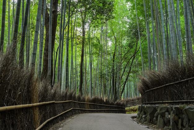 Foresta di bambù di arashiyama a kyoto, giappone