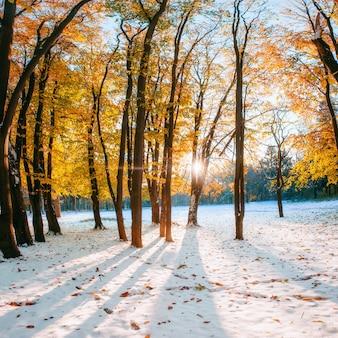 Foresta di faggi di montagna di ottobre con il primo inverno