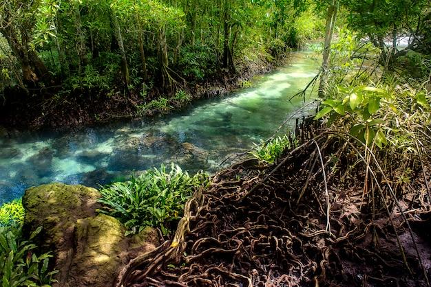 Foresta di mangrovie con fiume