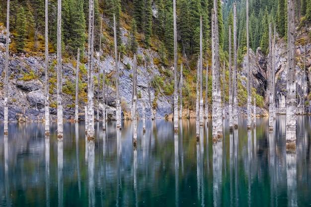 Foresta di pini allagata lago kaindy