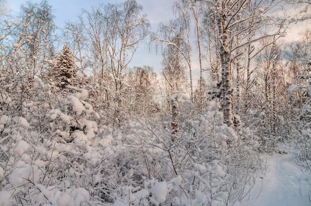 Foresta di snowy alla luce del tramonto