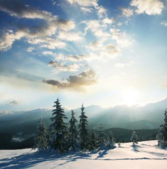 Foresta dopo la neve