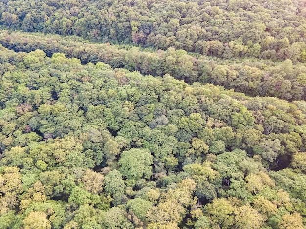 Foresta in autunno in anticipo, priorità bassa di vista superiore del fuco aereo.