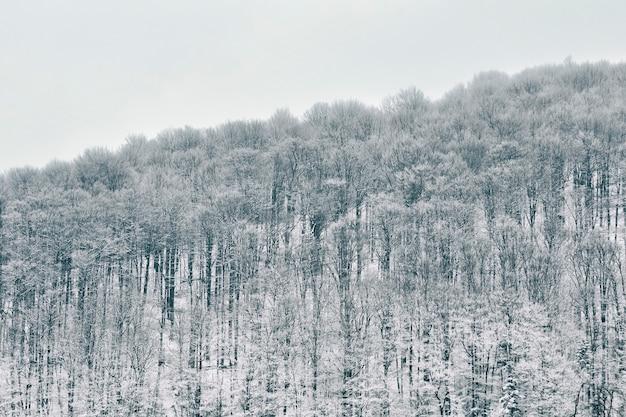 Foresta innevata sulla collina. paesaggio invernale