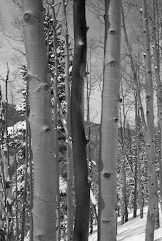 Foresta invernale a vail, in colorado