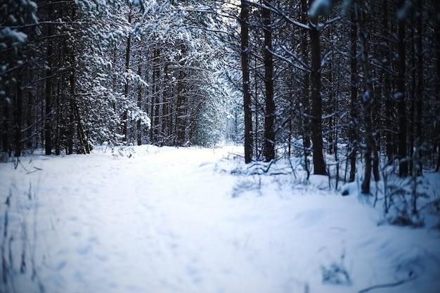 Foresta invernale bellissima