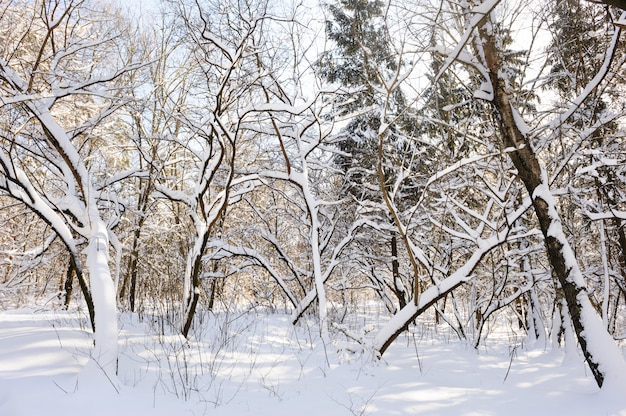 Foresta invernale innevato